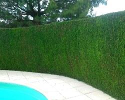 JFL PAYSAGE - Bron - Entretien d'espaces verts